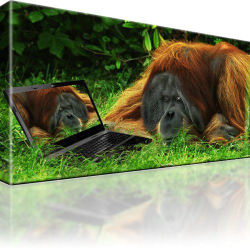 Affe Orang Utan Tiere Bild auf Leinwand