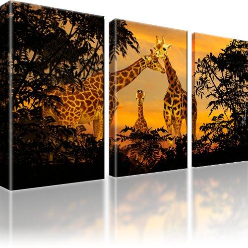 Giraffen Afrika Bild auf Leinwand 3-Teilig: 105x60 cm