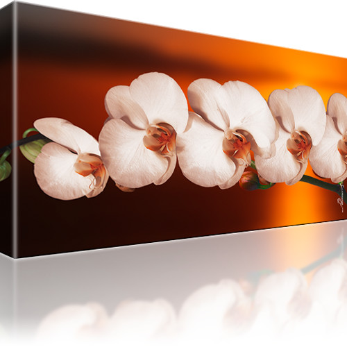 Orchidee Blume Kunstdruck 1-Teilig: 80x45 cm | Orange