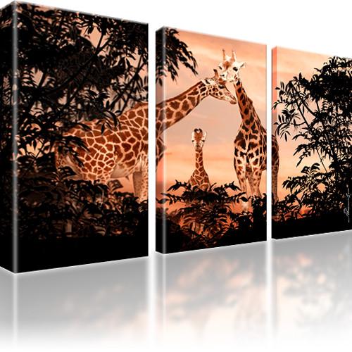 Giraffen Afrika Tiere Leinwandbild 3-Teilig: 105x60 cm | Orange