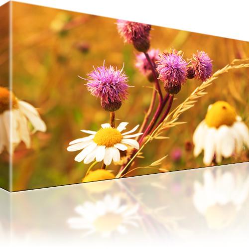 Blumen Kamille Leinwandbild