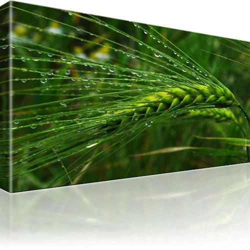 Weizen Tropfen Feld Wandbild auf Leinwand