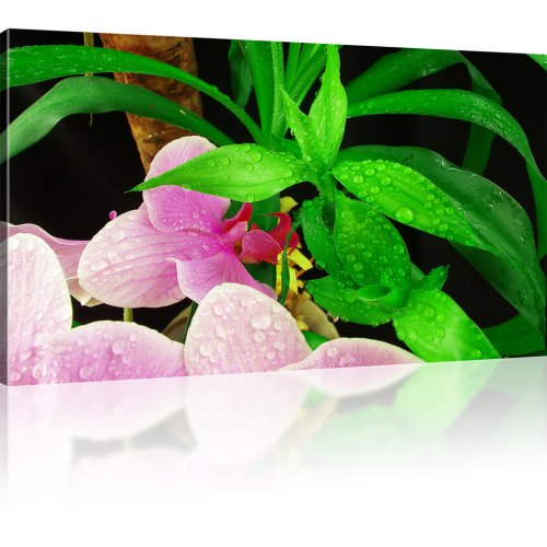 Orchideen Blumen Kunstdruck