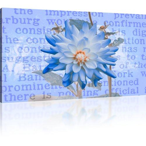 Aster Blume Bild auf Leinwand