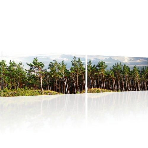 Panorama Wald Bild auf Leinwand
