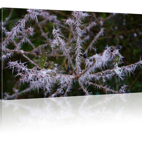Pflanze im Winter als Kunstdruck