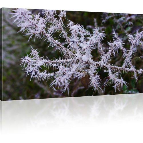 Ast im Winter als Kunstdruck