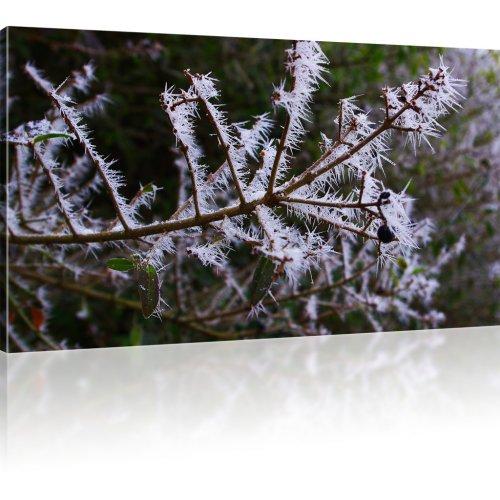 Winterast als Kunstdruck