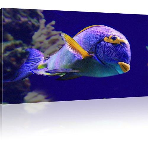 Korallenfisch als Kunstdruck