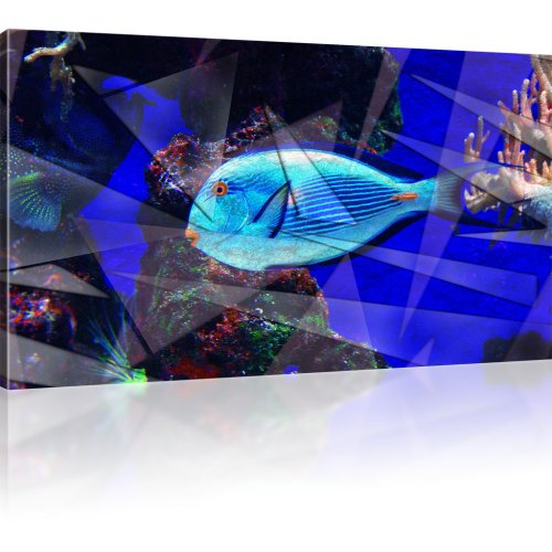 Blauer Korallenfisch Abstrakt als Kunstdruck