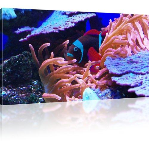 Exotischer Korallenfisch als Kunstdruck