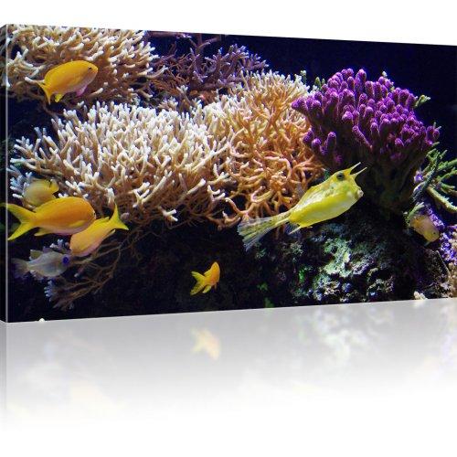 Gelbe Korallenfische als Kunstdruck
