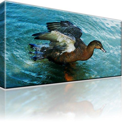 Ente Tier Leinwandbild 1-Teilig: 80x45 cm