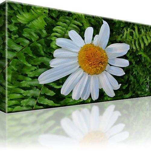 Kamille Blume Bild auf Leinwand 1-Teilig: 80x45 cm