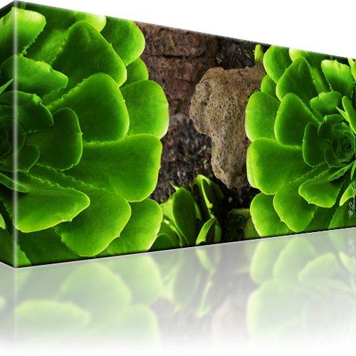 Pflanze Steine Wandbild