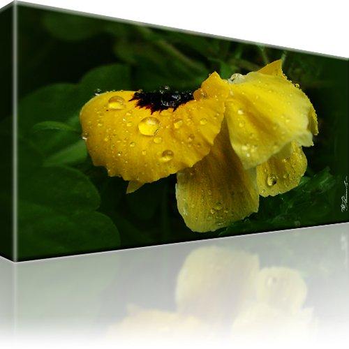 Mohn Blume Wandbild