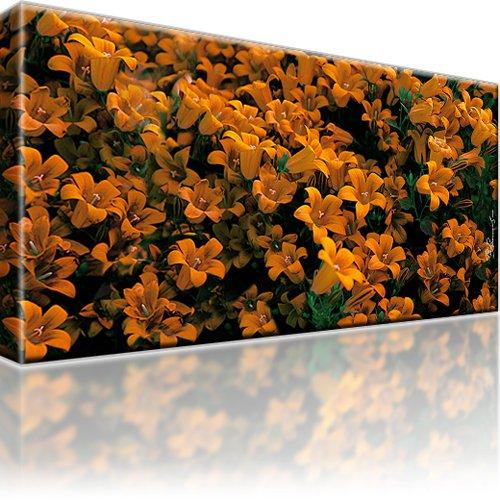 Blumen Bild auf Leinwand 1-Teilig: 60x35 cm