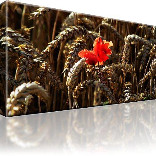 Mohnblume Weizen Kunstdruck