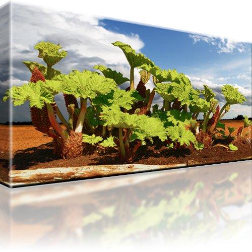 Pflanze Landschaft Wandbild
