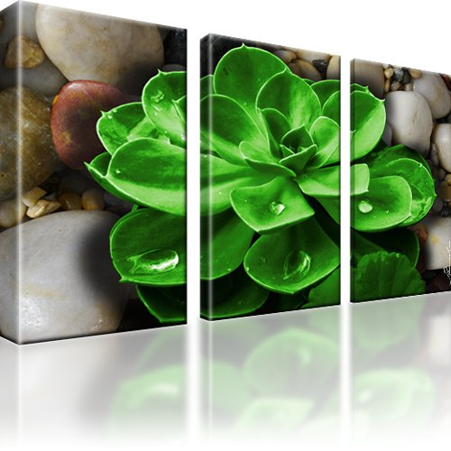Pflanze Wandbild 3-Teilig: 165x100 cm