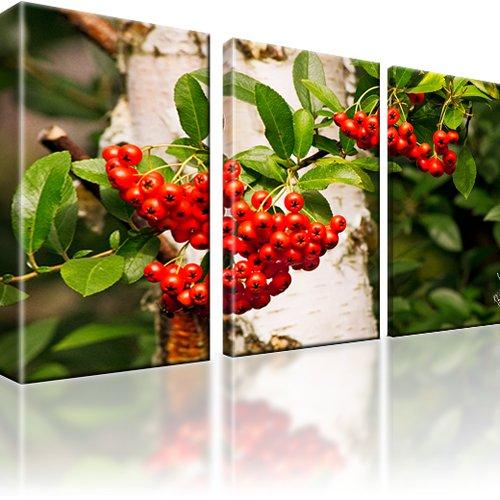 Eberesche Pflanze Bild auf Leinwand 3-Teilig: 165x100 cm