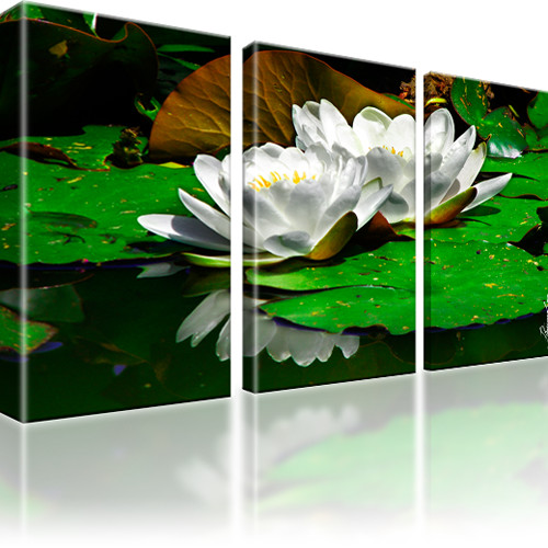 Seerose Blume Wandbild 3-Teilig: 105x60 cm   Mehrfarbig