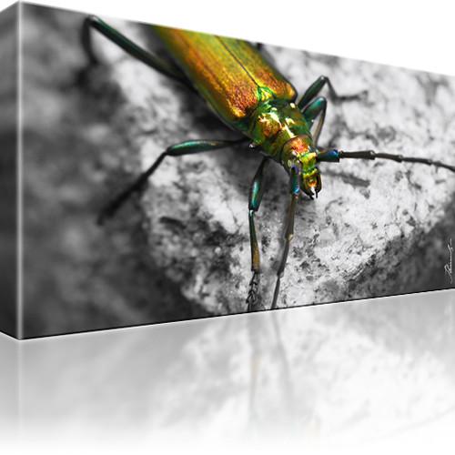 Käfer Eichenheldbock Insekt Kunstdruck