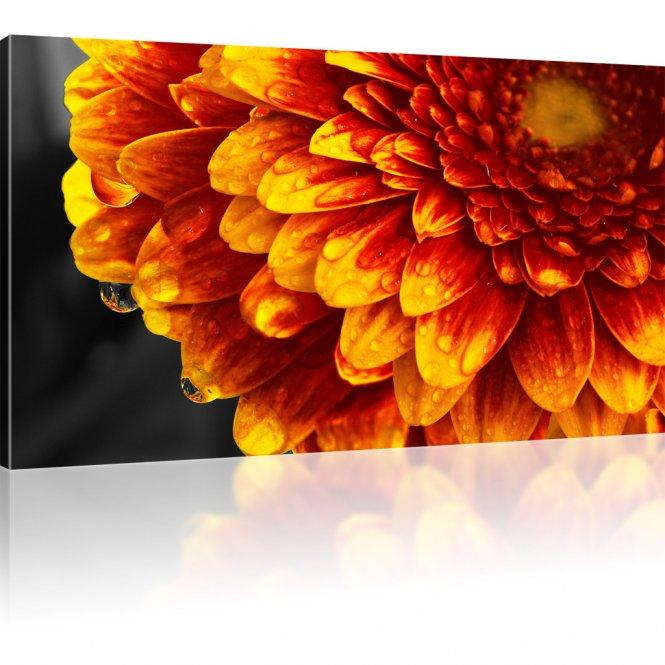 Gerbera Blume Wandbild