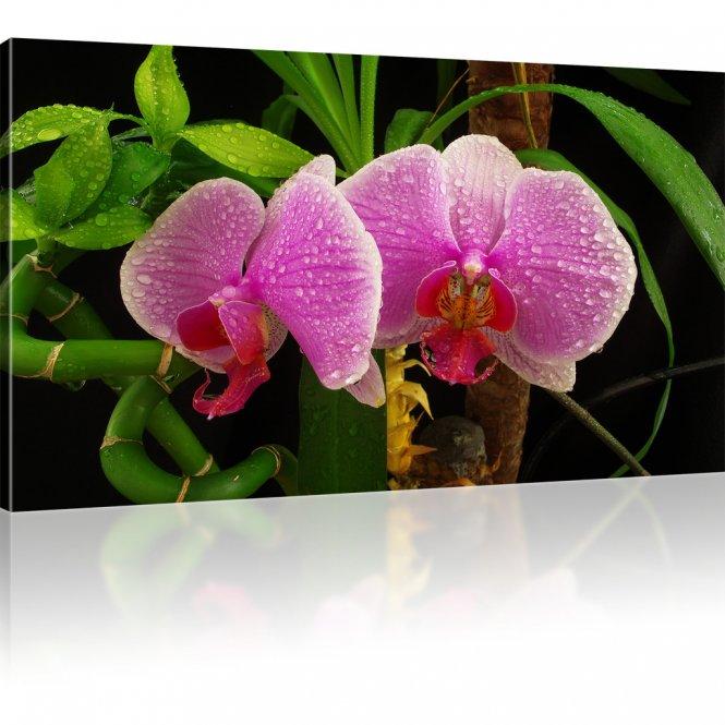 Orchidee Blume Leinwandbild