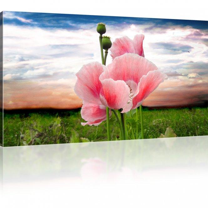 Mohnblume auf der Wiese Kunstdruck