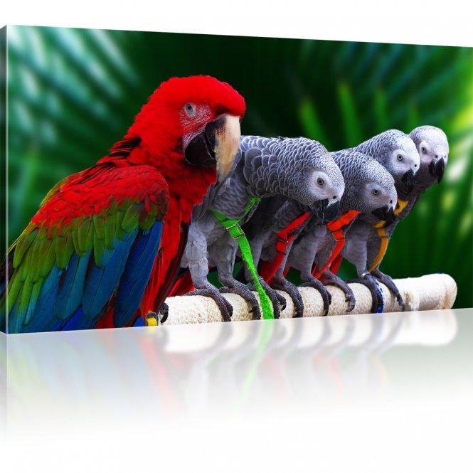 Hellroter Ara Papagei und Graupapageien Wandbild