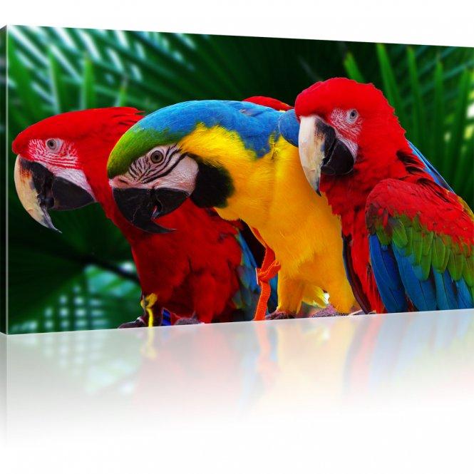 Ara Papageien Rot Geld Blau Bild auf Leinwand