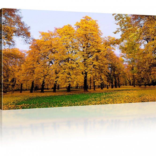 Park im Herbst Bild auf Leinwand