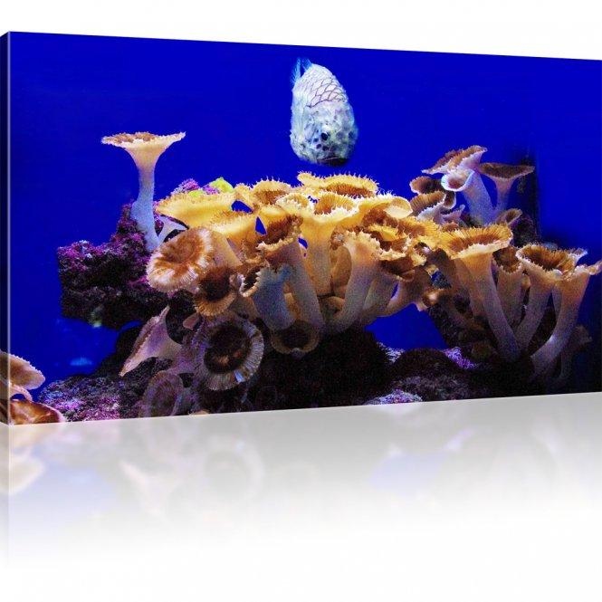 Korallenfisch mit Korallen als Kunstdruck