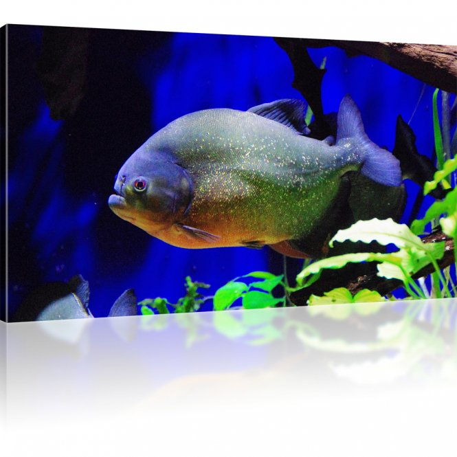 Exotischer Fisch als Kunstdruck