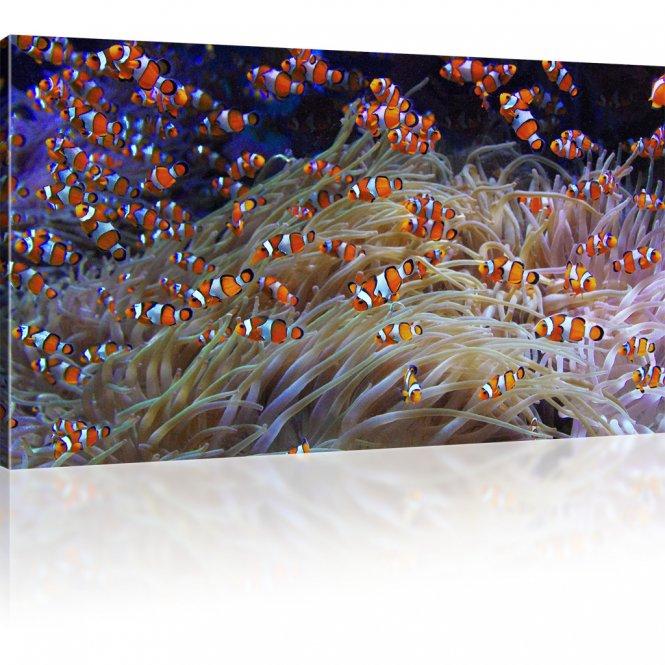 Korallenfische als Kunstdruck