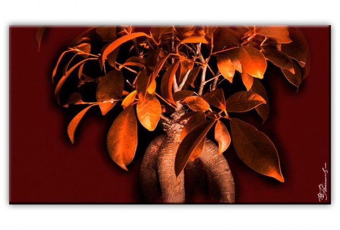 bonsai baum bild auf leinwand. Black Bedroom Furniture Sets. Home Design Ideas